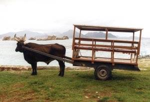 199502KR seychelles la digue ox cart
